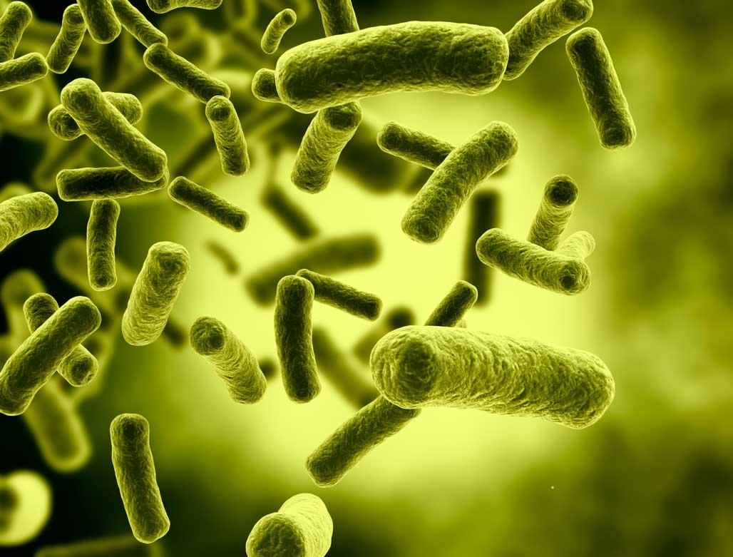 Khuẩn E.coli