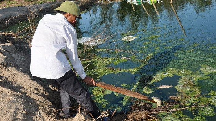 Trại tôm xả nước thải gây ô nhiễm môi trường